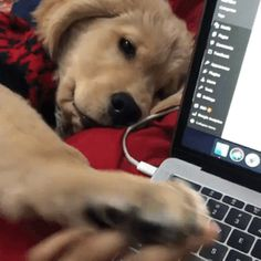 Golden Retriever Discover Any dogs and puppies that are cute. See more ideas about Cute Dogs Cute puppies Tags: Cute Funny Animals, Cute Baby Animals, Funny Dogs, Animals And Pets, Funny Memes, Cute Puppies, Cute Dogs, Dogs And Puppies, Doggies