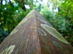 Como eliminar hongos en la madera.  Es decepcionante cuando observamos un mueble de madera y nos encontramos que está cubierto con moho y hongos. Normalmente, la madera con moho puede restaurarse siempre y cuando el hongo no haya devastado la pieza de madera.  #InfoWoox #Cuidado #Madera #Moho #Hongo
