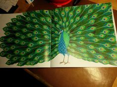 Millie Marotta Tropical World my first colored page