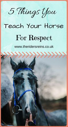 Horse Care Tips