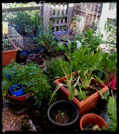 Kitchen garden by Natalie Hitoun