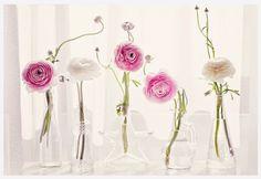 pink & white ranunculus...