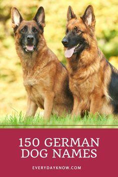 150 German Dog Names 150 German Dog Names With Images German