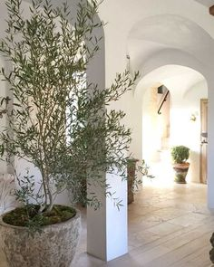 A breathtaking hallway with sculptural ceilings, plaster walls, white oak flooring, and archways.