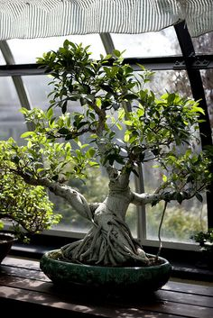 miniature too!  Beautiful Bonsai Tree (by Jared Cherup)