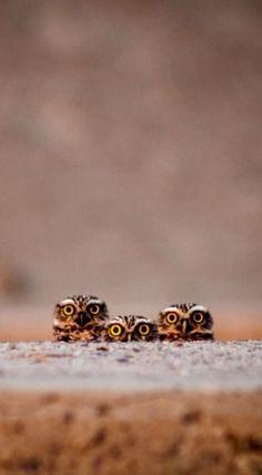 owls. by i365art