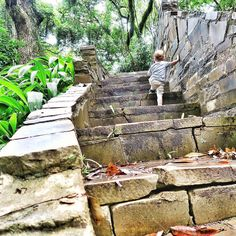 No feat is impossible; you just have to take it one small step at a time.   BTW: This staircase can be found on Avery Island in the Jungle Gardens. Jacques was 2 years old and already ready to explore.  #openmyworld #goplayoutside  #wildernessculture #letsgosomewhere #ourplanetdaily #wildlifeplanet #keepitwild #stayandwander #campvibes #lonelyplanet #passionpassport #explorewildly #finditliveit #adventuremobile #rei1440project  #exploremore #bestvacations #natgeo #travelstoke…
