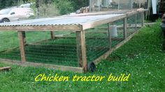 Building a large chicken tractor