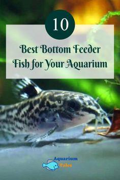 Saltwater Fish Tanks, Saltwater Aquarium, Planted Aquarium, Cory Catfish, Biotope Aquarium, Plecostomus, Brine Shrimp, Nano Tank, Freshwater Aquarium Fish