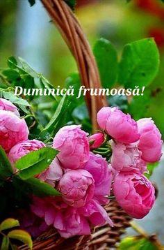 Rose, Garden, Flowers, Plants, Thoughts, Pink, Garten, Lawn And Garden, Gardens
