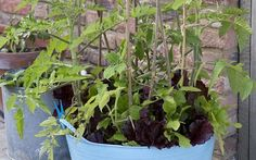 One pot, ten crops: how to grow food in one container all year round Short on space? You can still grow vegetables throughout the year with just one pot