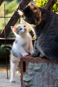 Please Mum, pleeeeez!