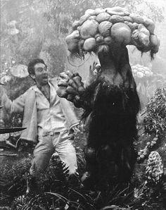 midnightgallery:  Matango, Fungus of Terror, (1963) directed by Ishirō Honda