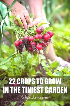 22 Crops to Grow in a Small Vegetable Garden 22 Crops to Grow in a Small Vegetable Garden,Cool Flower Gardening Plants You Will Enjoy herb gardening By Using These Helpful Suggestions Related posts:Im Garten. Backyard Vegetable Gardens, Veg Garden, Small Garden Vegetable Growing, Small Herb Gardens, Garden Bar, Garden Edging, Garden Landscaping, Gardening For Beginners, Gardening Tips