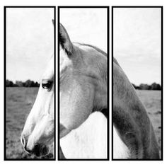 Check out this item at One Kings Lane! Elegant Horse Triptych