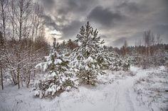 Frosty morning by udavblog