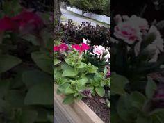Singing in the Garden September 30 2020 Bliss, 30th, Singing, September, Garden, Plants, Garten, Lawn And Garden, Gardens