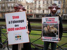 Non à la ferme aux 1000 vaches - http://www.franceregion.fr/non-a-la-ferme-aux-1000-vaches-art484 © Ethique & Animaux
