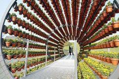 Pergolagång med hundratals krukväxter