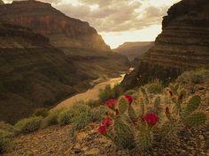 Grand Canyon, Arizona, USA (via National Geographic)
