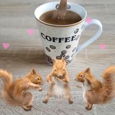 Good Morning Coffee Gif, Good Morning Flowers Gif, Good Morning Friday, Good Morning Friends, Good Morning Greetings, Good Morning Good Night, Good Morning Quotes Friendship, Cute Good Morning Quotes, Good Morning Images