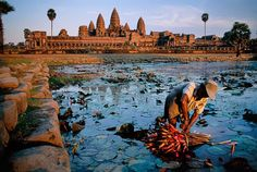 "Photo by @stevemccurryofficial // A man harvests lotus flowers in the pool at Angkor Wat Temple.  Angkor located in northwestern Cambodia covers an area of some 200 square kilometers. Built in the early 12th century during the Khmer Empire this new state temple came to be called Angkor Wat meaning ""The city that is a temple."" Pilgrims who journey here sustain a tradition by offering lotus flowers to the site's Buddhas. #cambodia #khmer #angkorwat by natgeo"