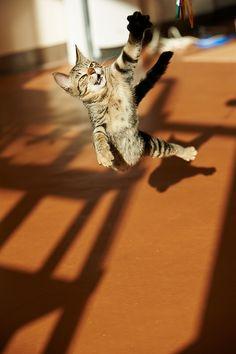 фотогеничной кошачьих | 89cats. по rampx на Flickr.