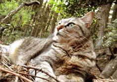 森の中の姫