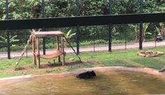 After Being Locked Inside Cage For Years, Rescued Bear Can't Contain Excitement This bear, named Tuffy, was rescued from a bear bile farm. Bear bile is used by traditional Chinese medicine practitioners. Funny Animal Videos, Animal Memes, Funny Animals, Wild Animals, Funny Photoshop Pictures, Jumping For Joy, Bar, Simple Pleasures, Kittens Cutest