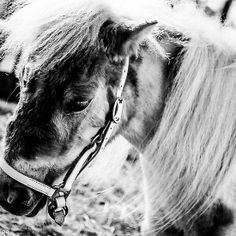 Imposed; a horse in BW