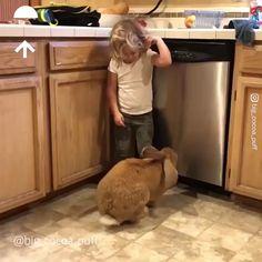 My giant rabbit pet – Rodrigaa - Baby Animals Cute Funny Animals, Cute Baby Animals, Funny Dogs, Animals And Pets, Cute Animal Videos, Funny Animal Pictures, Pet Rabbit, Cute Bunny, Big Bunny
