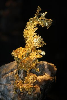 """""""The Dragon"""" Gold and Quartz / Colorado Quartz Mine, Mariposa County, California / Mineral Friends <3"""