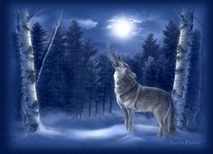 """indian wolves pictures 