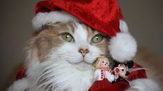Download wallpaper holiday, cat, new year, hat, cat, section cats in resolution 1920x1080