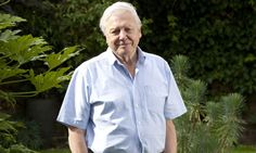 David Attenborough, TV naturalist    The voice of wildlife, conservation and all things that wriggle, fly and roam across planet Earth, Sir David is still going strong at 80. His programmes have brought the natural world into the living rooms of millions over 50 years and his contribution to public awareness of natural science brought him a fellowship of the Royal Society. A Reader's Digest poll this year voted him most trusted celebrity in Britain.