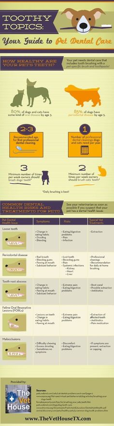 Theis chart contains information on how to tell if your dog has any type of tooth or gum disease and gives you advice on how to prevent them and take care of you furry friend's mouth.