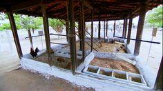 Globo Rural | Saiba como construir um modelo simples de galinheiro | Globo Play