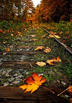 leaves on an old railway by elvia