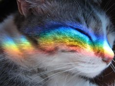 We can become obvious to the rainbow colors in life.....even when they stream in and touch us .....