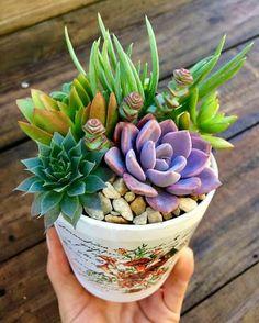 42 Ideas How To Make Succulent Arrangements Dish Garden Colorful Succulents, Succulents In Containers, Cacti And Succulents, Planting Succulents, Cactus Plants, Planting Flowers, Flowering Plants, Air Plants, Succulent Gardening