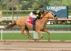 Finest City (USA) 2012 Ch.m. (City Zip (USA)-Be Envied (USA) by Lemon Drop Kid (USA) 1st Santa Monica H (USA-G2,7fD,Santa Anita)