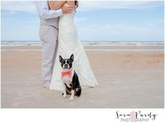 Beach wedding with our Boston terrier, Murph man!