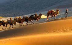 Trekking Tour Badain Jaran Desert in der  Innere Mongolei, ein unvergessliches Erlebnis!