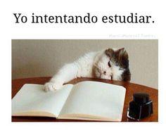 Hay dias... Intentando estudiar. #humor #risa #divertidas