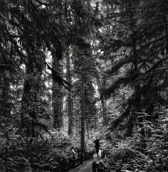 Cathedral Grove by The Nature of Things, via Flickr - near Parksville and Qualicum Beach on Vancouver Island Vancouver Island, Forests, British Columbia, Black And White Photography, Places Ive Been, Cathedral, Art Photography, Trees, Canada