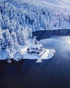 stunning beauty in winter