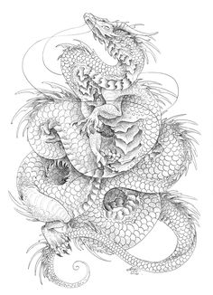 Biro drawing on heavy weight cartrage paper :) Chinese, dragon, coils, mythology, dragons, illustration.