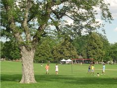 Volleyball in Wash Park: Denver, CO - we don't have to play volleyball, but what about kickball with beer and bbq? (weather permitting)