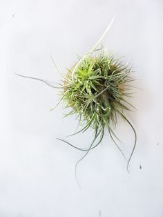 Reserved for Charmey0516 - Vertical Garden Plaque - Round wall hanging with assorted air plants.