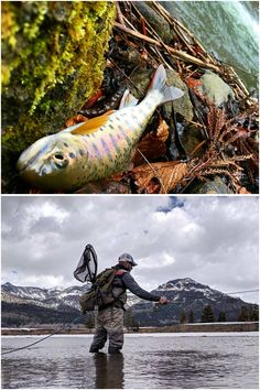 Lake trout arent considered schooling fish but likely tend to stay in the same a. - Lake trout arent considered schooling fish but likely tend to stay in the same area. This means tha - Lake Trout Fishing, Trout Fishing Tips, Bass Fishing, Fish Bites, Types Of Fish, Famous Last Words, Underwater, School, Image
